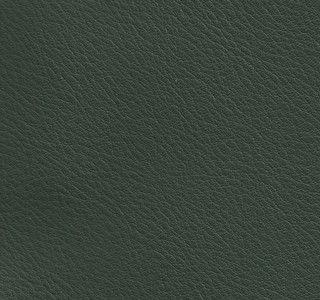 jackson-evergreen